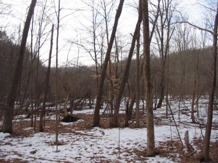 the alder swamp