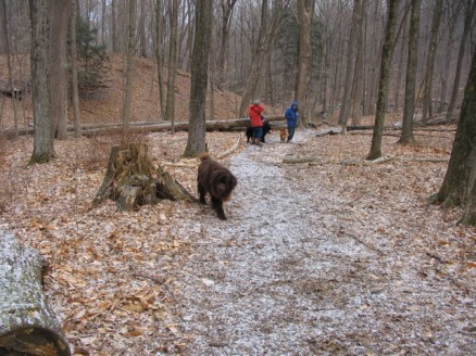 Dogs at the Kitchawan Preserve