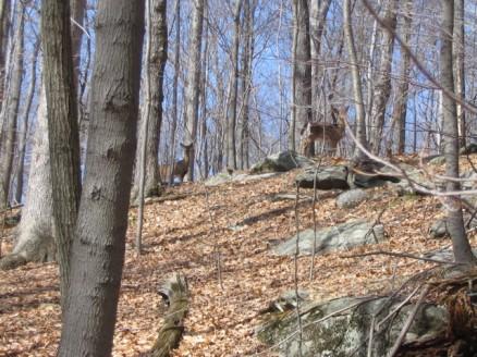 Westchester Wilderness Walk