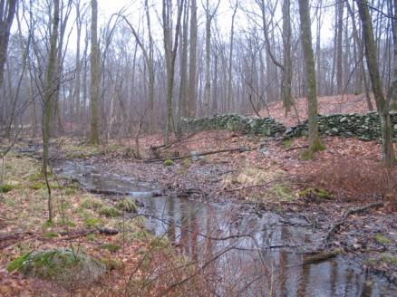 Clark Preserve stream
