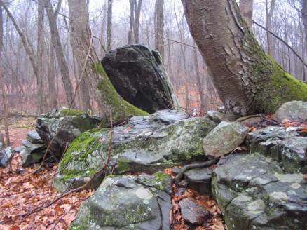Clark Preserve mossy rocks